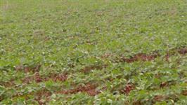 Fazenda em Goiás aceita permuta e da prazo