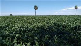 Fazenda em Goiás para agricultura ac. Imoveis