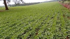 Fazenda para soja próximo a Goiânia