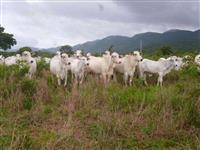 Fazenda no sul do Tocantins ac troca e dá prazo