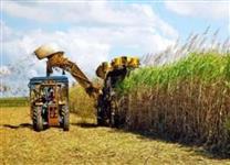 Fazendas arrendadas para plantio de cana em Goias