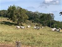 Fazenda para Pecuaria no sul de Goiás ac permuta