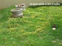 KAPINA HERBICIDA SELETIVO PARA CONTROLE DE TIRIRICA SEM AGREDIR SEU GRAMADO