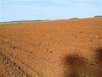 Fazenda Agrícola Espetacular Sul do Paraná 460 ha de Alta Produção