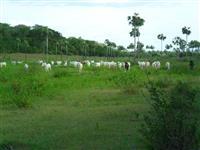 Fazenda Cocal