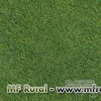 Sementes grama esmeralda  - Frete grátis (1 quilo)
