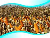BOKASHI - Fertilizante orgânico para aplicação foliar e fertirrigação
