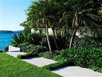 Palmeira Fênix (Phoenix Roebelenii) - DIRETO PRODUTOR