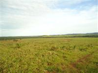 Fazenda de 1.580 hectares ( 326,45 alq.) na região de Pedro Afonso-TO