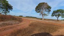 Arrendamento para lavoura de soja na região de Aliança do Tocantins