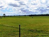 Fazenda de 232 alq. (1.123 ha.) Dueré – To
