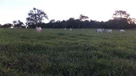 Fazenda de 50 alq.(242 ha.) em Trindade-Go
