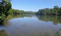Fazenda de 665 alq.(3.218 ha.) no mun. da Lagoa da Confusão