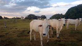 Fazenda de 232 alq. (1.123 ha.) mun.de Nova Crixas-Go