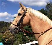 venda permanente de cavalos de todas as raças