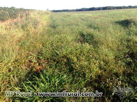Fazenda a venda em Araguari - MG com 329 ha.
