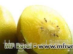 SEMENTES DE ACTINIDIA CHINENSIS - GOLD KIWI