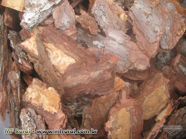 Casca de Pinus Ornamental e Substrato para Orquídeas e Plantas