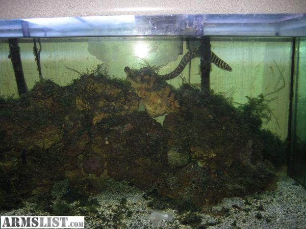 Armslist for sale trade 75 gallon saltwater fish tank for Saltwater aquarium fish for sale