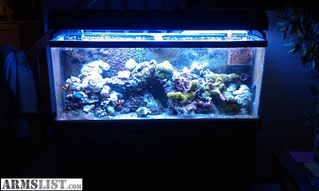Armslist for sale trade 55 gallon saltwater reef tank for 1000 gallon fish tank for sale