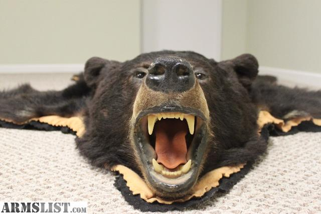 Newer Nicely Done Black Bear Skin Rug (on Felt) 64