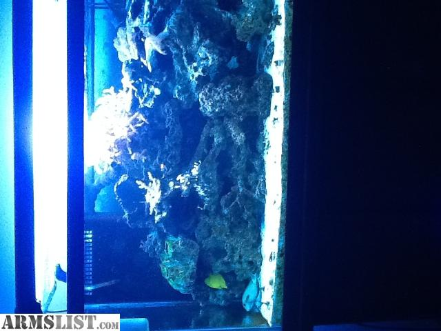 Armslist for sale 60 gallon saltwater fish tank for Saltwater fish tank for sale