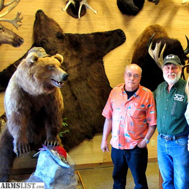 Alaska Wildlife Rugs And Taxidermy Wasilla Ak: For Sale: Brown Bear/Grizzly Rug