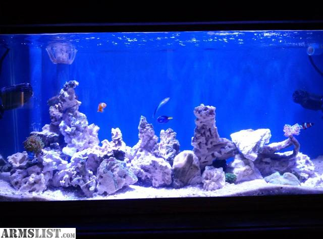 Armslist for sale trade saltwater fish tank for bow for Saltwater fish tank for sale