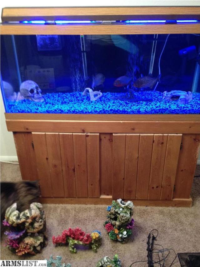 Armslist for sale 75 gallon fish tank with 3 large red for Amazon fish tanks for sale