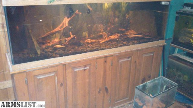 Armslist for sale trade 125 gallon fish tank and stand for 125 gallon fish tank stand