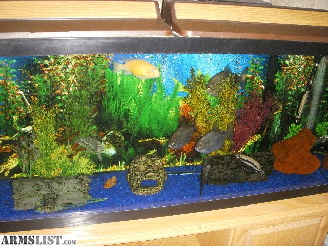 55 gallon fish tank and stand for sale 2017 fish tank for 55 gal fish tank