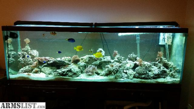 Armslist for sale trade 125 gallon saltwater tank for Amazon fish tanks for sale