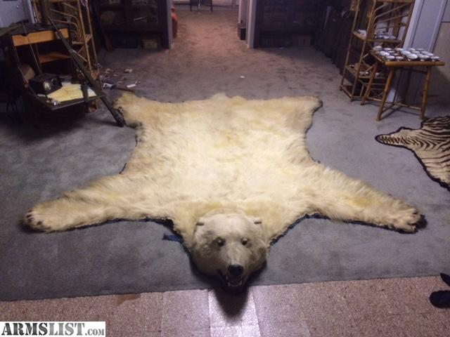 First Off, The Polar Bear Rug Is 100% Authentic, And Even Though It Was  Taken ~90 Years Ago, It Still Cannot Leave The State Of Kansas, Or Cross  Borders ...