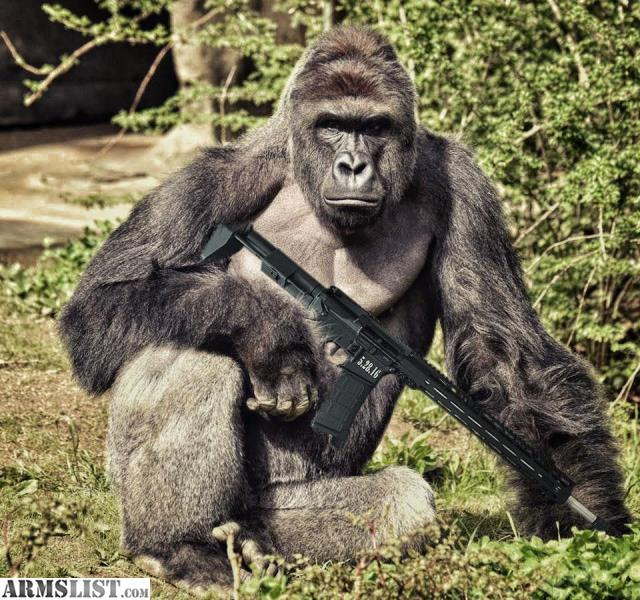 Lionfact besides Ngel Sommer as well Southwest  United States of America moreover Reno Nevada Rifles For Sale Harambe Gatshack besides Muslims Mali Mourn Loss Gaddafi 362988. on reno nevada zoo