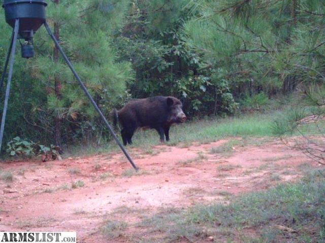 Armslist for sale upstate south carolina hog hunting for Sc fishing license cost