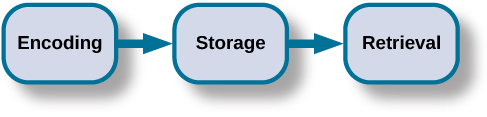 "A diagram shows three boxes, placed in a row from left to right, respectively titled ""Encoding,"" ""Storage,"" and ""Retrieval."" One right-facing arrow connects ""Encoding"" to ""Storage"" and another connects ""Storage"" to ""Retrieval."""