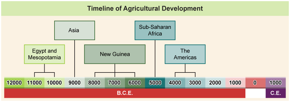 Figure is a Timeline of Agricultural Development. The timeline covers the year range of 12000 B.C.E. to 1000 C.E. Between the years 11000 B.C.E. and 10000 B.C.E., Egypt and Mesopotamia began developing agricultural techniques. In the 9000s B.C.E. Asia began developing agricultural techniques. Between the years 8000 B.C.E. and 6000 B.C.E., New Guinea began developing agricultural techniques. In the 5000s B.C.E., Sub-Saharan Africa began developing agricultural techniques. Between the years 4000 B.C.E. and 3000 B.C.E., the Americas began developing agricultural techniques.