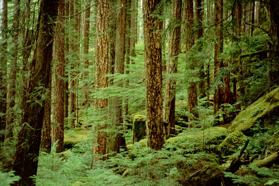 The photo shows undergrowth in a forest.