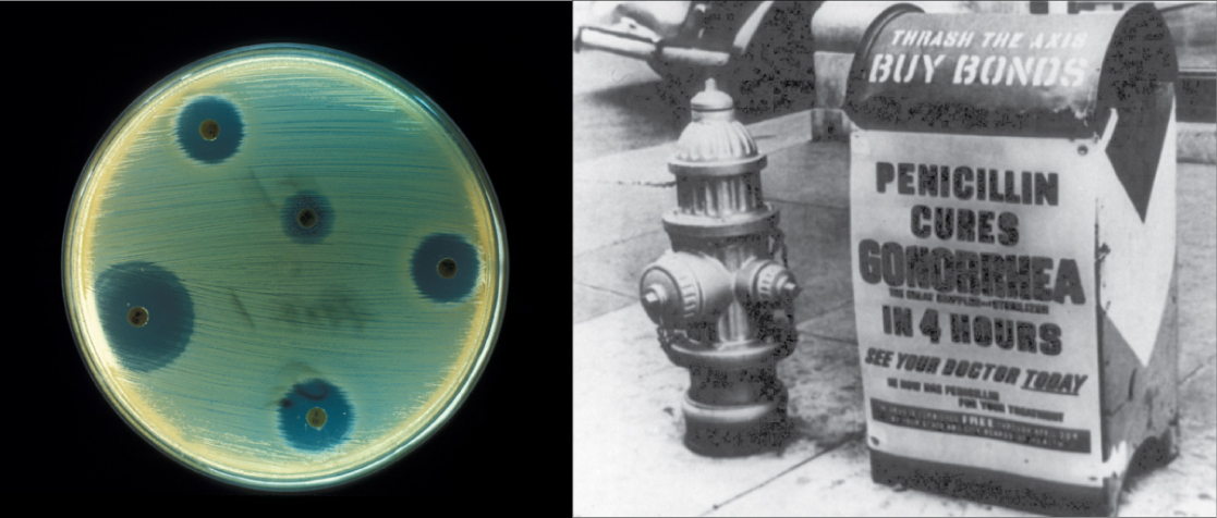 """The left side of this image is an old black and white photo of a mailbox plastered with an advertisement reading """"Penicillin cures gonorrhea in four hours. See your doctor today."""" The right side of the image shows a petri dish streaked with bacteria. Bacteria grow everywhere on the plate except where discs containing antibiotic have been placed. These areas are completely devoid of bacterial growth"""