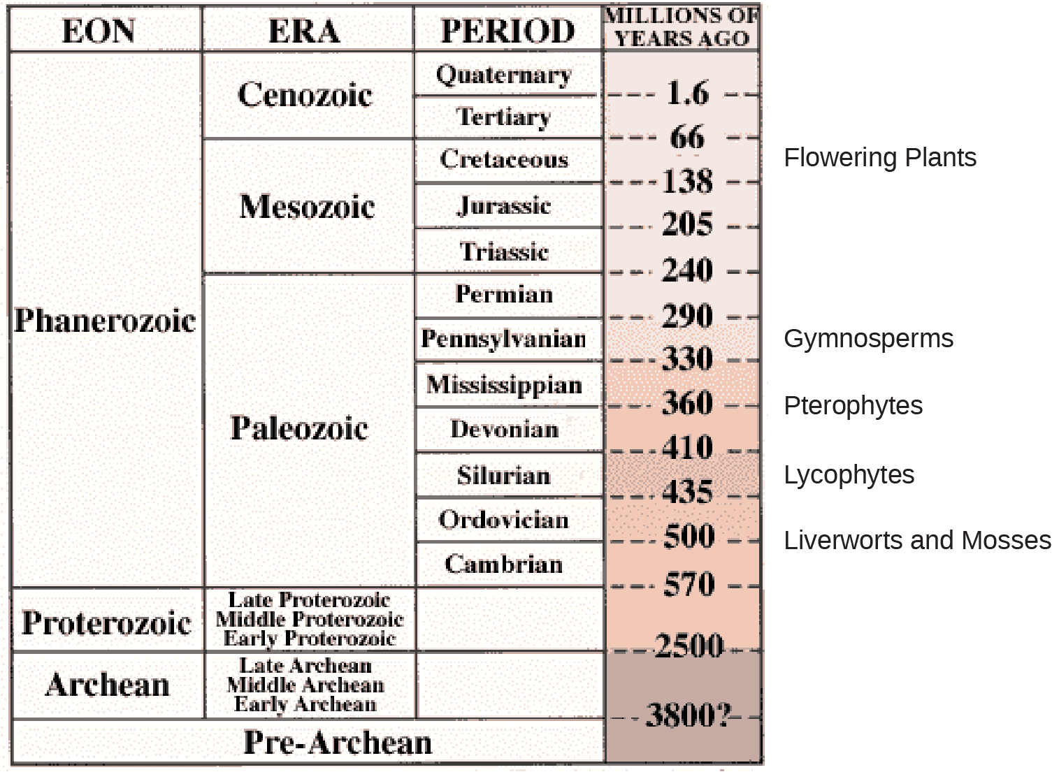 Image is of a table showing a timeline of geological eons and eras. PreArchaen eon. occurs more than 3.8 billion years ago. Archean eon. occurs more than 2.5 billion years ago. Proterzoic eon occurs between 570 million and 2.5 billion years ago. The most recent eon, the Phanerozoic began 570 million years ago. Within it, the liverworts and mosses appeared about 500 million years ago, at the end of the Cambrian period in the Paleozoic era. Ther lycophytes developed about 400 million years ago during the silurian period.  Pterophytes about 360 million years ago at the start of the Mississippian period. Gymnosperms about 290 million years ago during the Pennsylvanian period. All of these remained in the Paleozoic era. In the subequent era, the Mezozoic, Flowering Plants appeared about 70 million years ago during the Cretacious period.