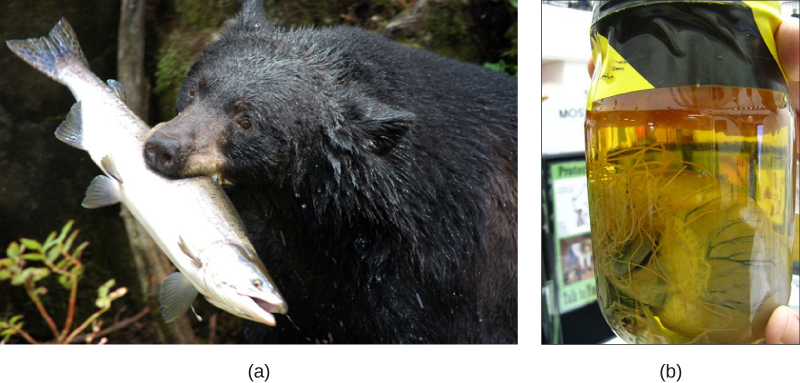 Part a shows a bear with a large fish in its mouth. Part b shows a heart in a jar. Long, threadlike worms extend from the heart.