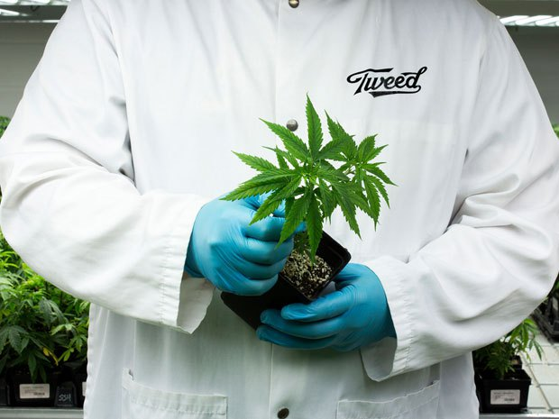 Canopy Growth Corp Share Price Could Soar On World S Biggest Stock