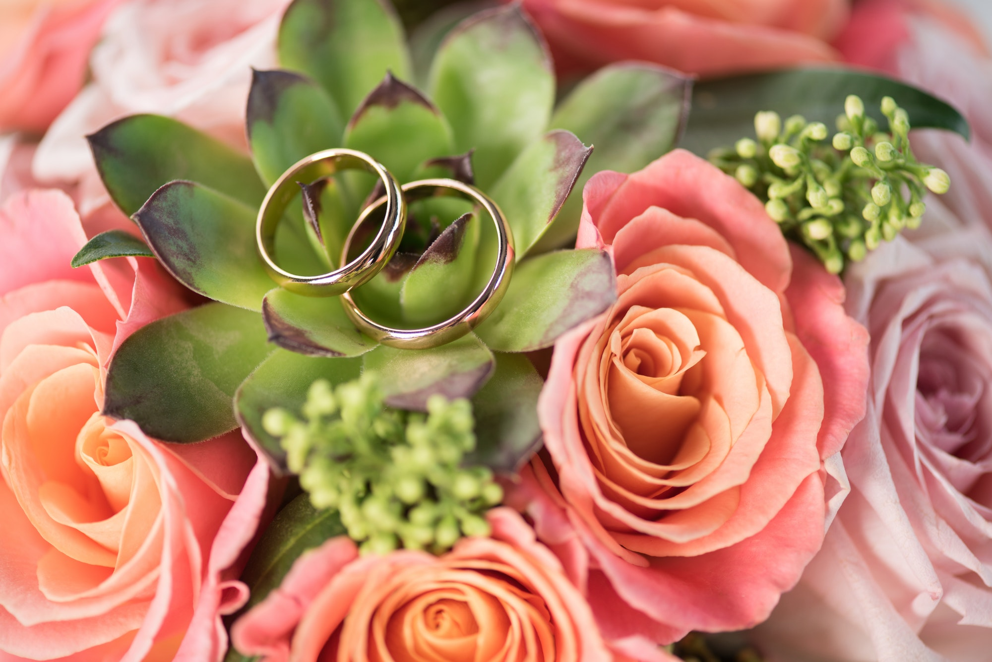 two golden wedding rings on bouquet on roses and succulent, wedding rings and flowers concept