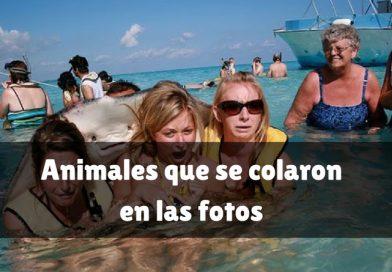 Animales que se colaron en las fotos