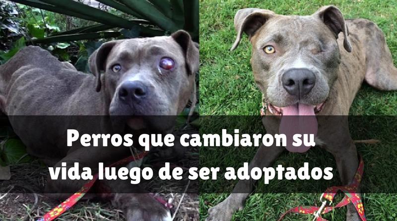 Perros que cambiaron su vida luego de ser adoptados