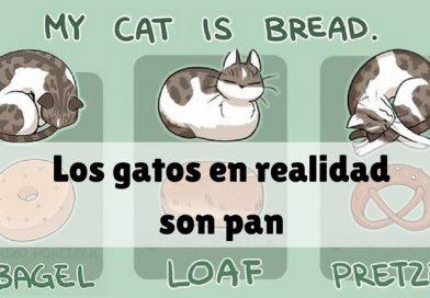 Los gatos en realidad son pan