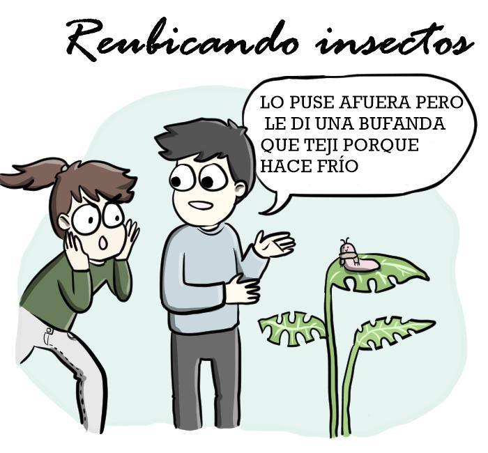 reubicando-insectos-tareas-de-novios-moderno