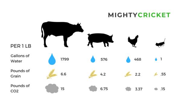 Sustainability Mighty Cricket Protein Powder comparison beef pork chicken