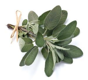 5 Uses for Sage Essential Oil