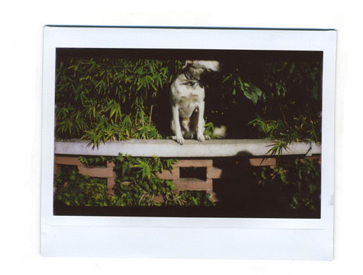 instaxWide7